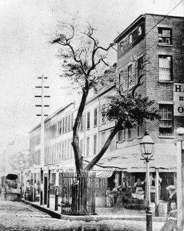 Pear Tree Corner - The NYC history behind the tree that gave Moth her name.