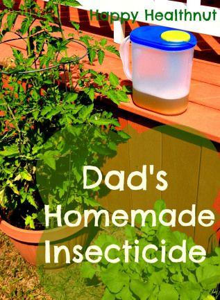 Dads Homemade Insecticide Garden Ideas Pinterest