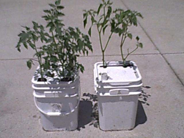 Diy Self Watering Planter Dream Garden Pinterest