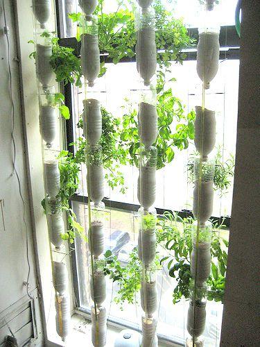 Window garden from 2 liter bottles 2 liter bottle ideas for Window garden