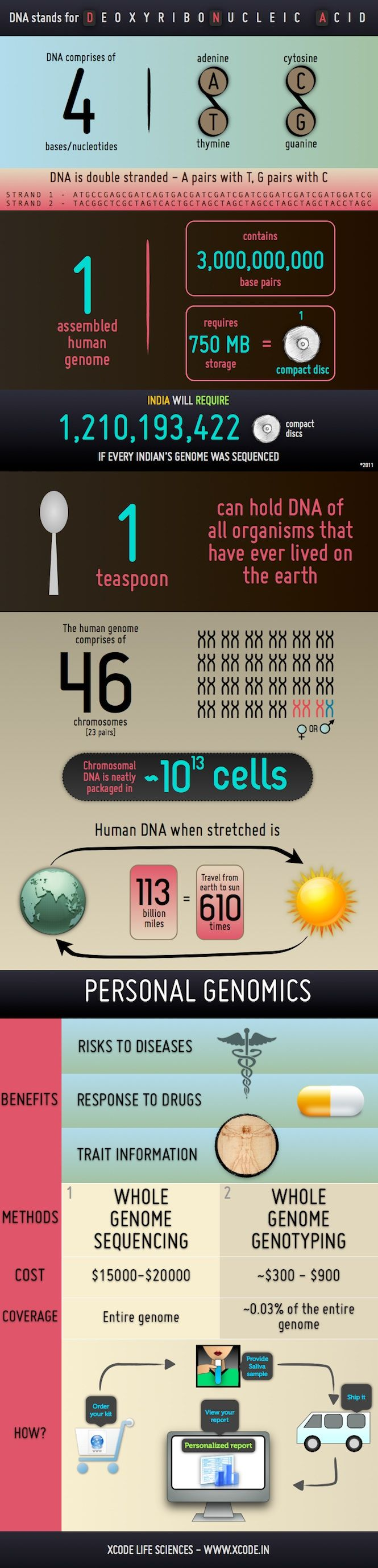 A graphic on DNA (Deoxyribonucleic Acid), human genome and personal genomics.