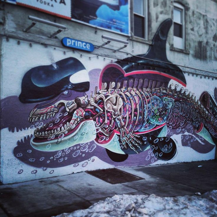 skeleton of orca - street art | Street Art | Pinterest