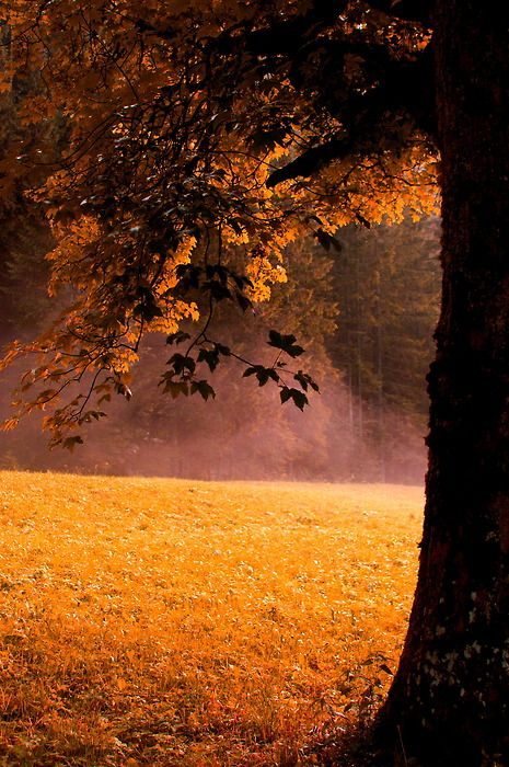 An Autumn morn,beautiful....