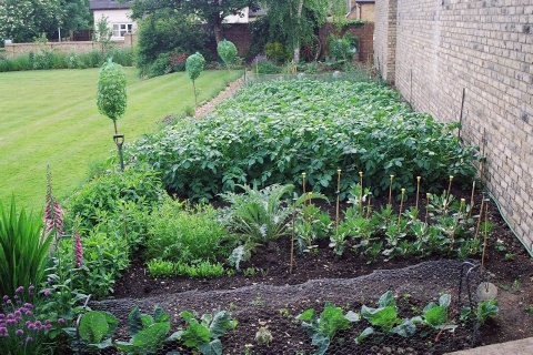 Vegetable beds in an urban setting. Someday, me too.