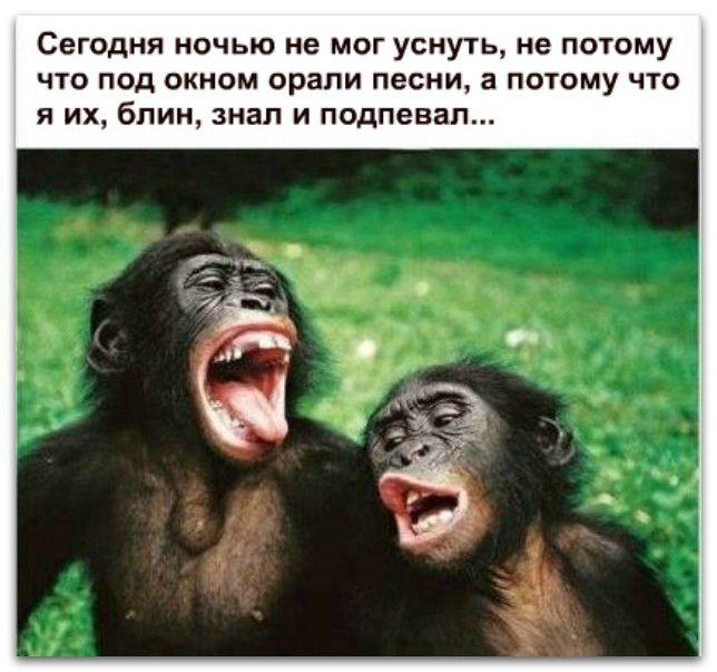 Анекдот Про Обезьяну