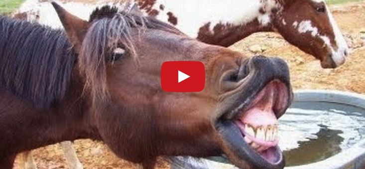 funny animal sounds cats dogs and domesticated animals pinterest