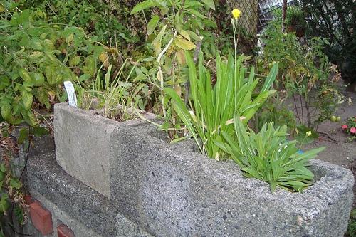 Urban Gardening Ideas Cinder Blocks graph