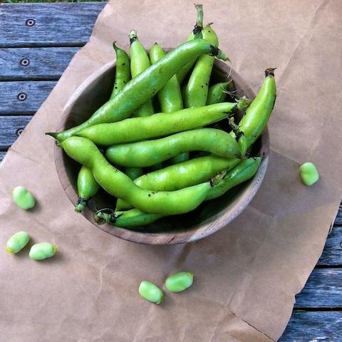 Seared Scallops With Fava Bean Sauté Recipes — Dishmaps