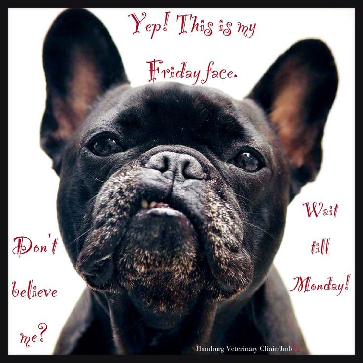 Happy FridayHappy Friday Animal
