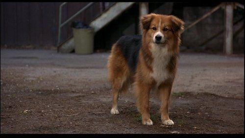 Dog Breeds From Homeward Bound