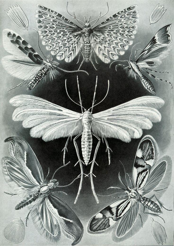 エルンスト・ヘッケルの画像 p1_7