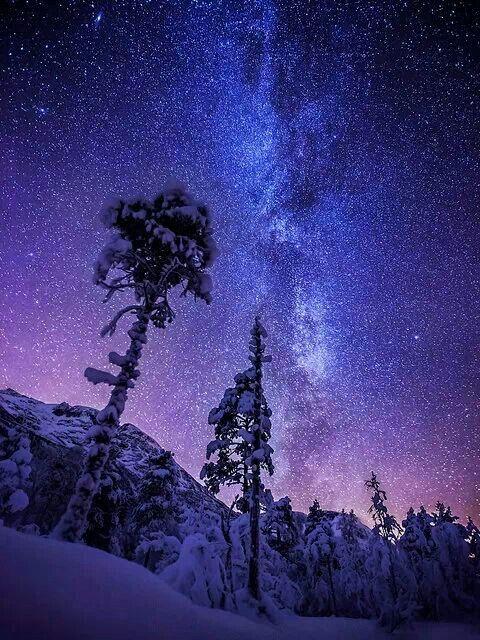 Starry winter night | The cosmos | Pinterest