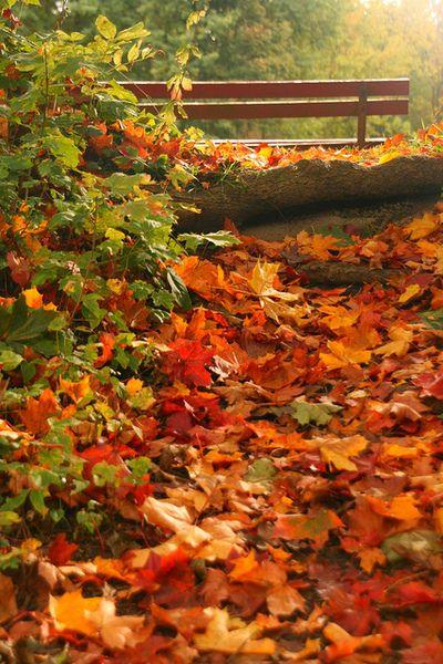 Fall leaves near a bridge ;)