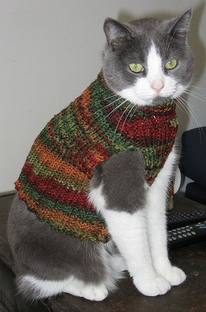 Knitting Pattern For Cat Sweater : Cat vest Knitting Patterns Free Pinterest