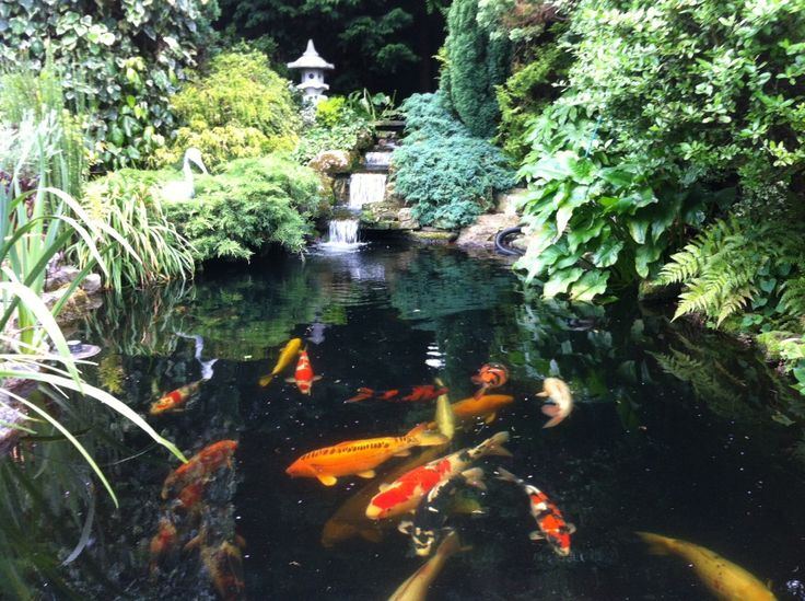 Japanese koi pond car interior design for Koi for sale san diego