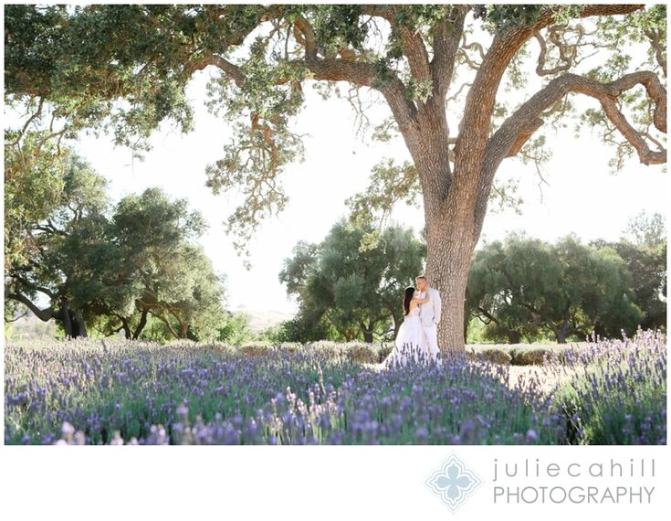 lavender claremont