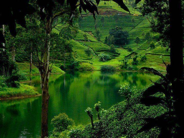 Lush Green Hills Sri Lanka Beautiful Places I Want To Be Pintere