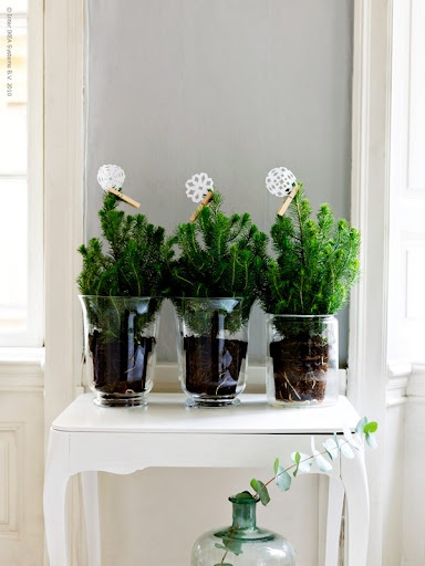christmas trees in glass containers - Solid frog: Christmas inspiration