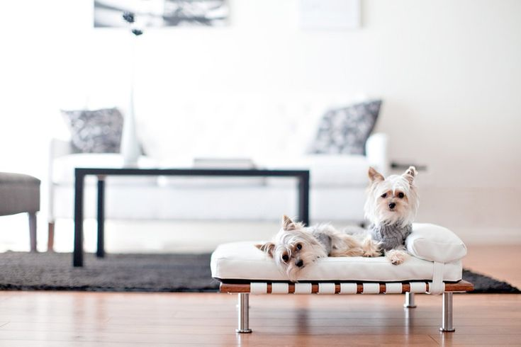 "aww sooo cute!!!  Modern Pet Bed, daybed and lounger (Small Dog Bed / Cat Bed, 25""x19""). $155.00, via Etsy."