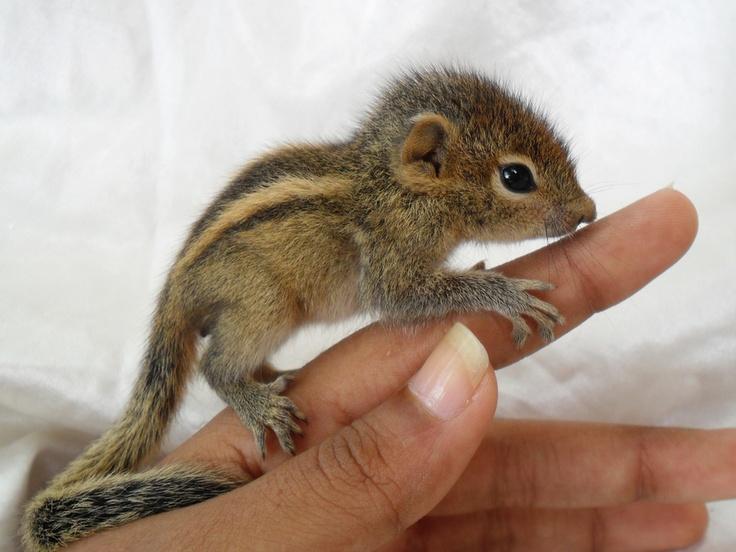 how to raise wild newborn mice