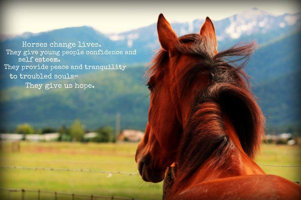 Quotes About Horses Changing Lives Horses Change Lives They