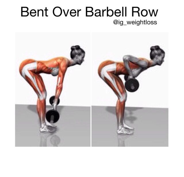 Bent over barbell row muscle anatomy pinterest