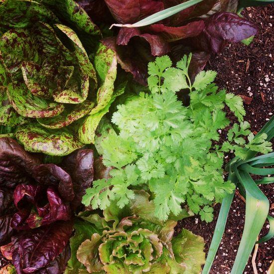 Garden Vegetable Chowder Recipe — Dishmaps