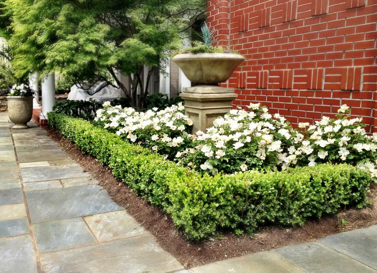 Landscaping With Boxwoods And Roses : Pin by kaitlyn williams on outdoor living landscaping