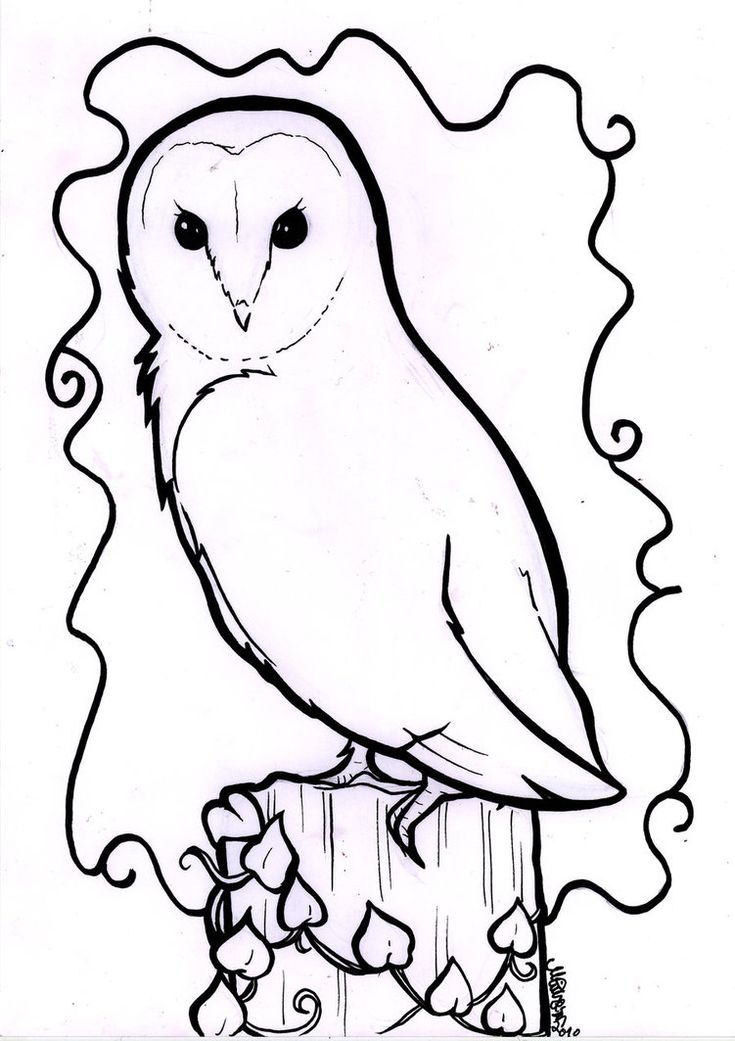 Owl Line Drawing Tattoo : Barn owl line drawing pinterest