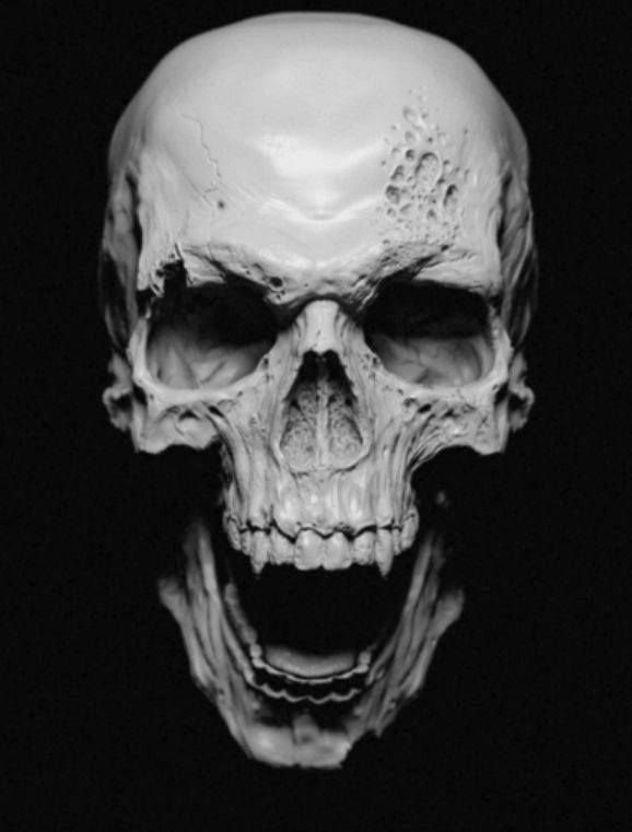 Skulls amp bones skulls amp bones pinterest