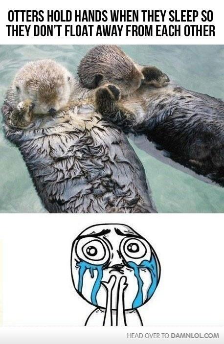 Stop making me weepy.