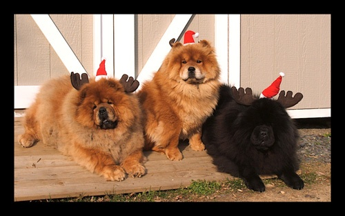 chow chow reindeer | Chow Chows | Pinterest