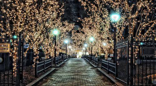 the lights <3