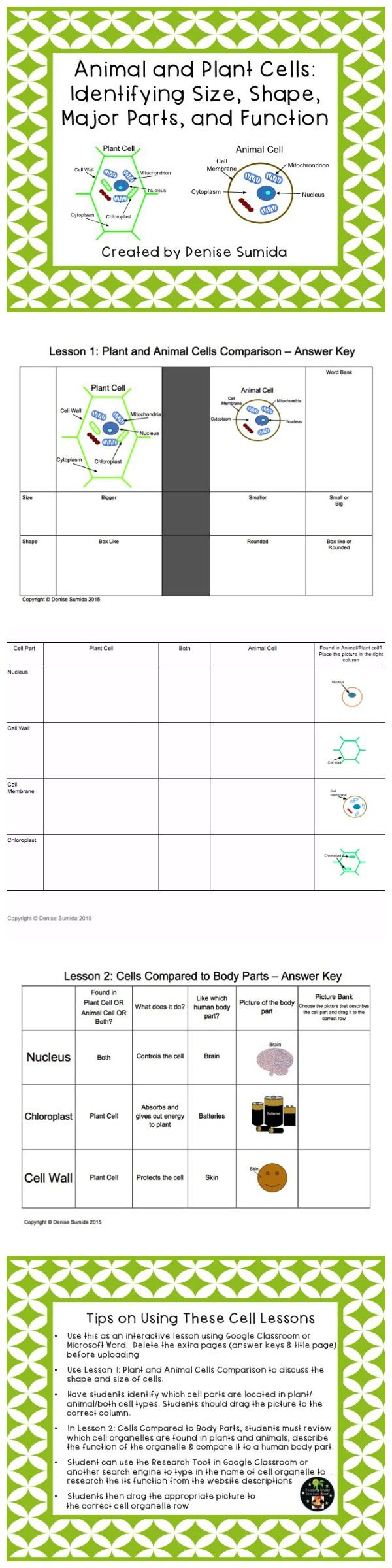 Cell review worksheet answers