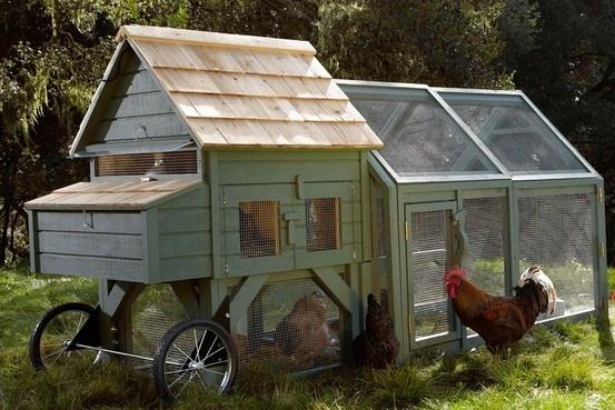Fancy Backyard Chicken Coops : chicken tractor  Homesteady  Pinterest