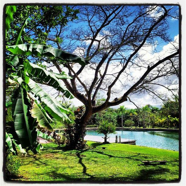 Jardin botanico caguas pr puerto rico pinterest for Bodas jardin botanico caguas
