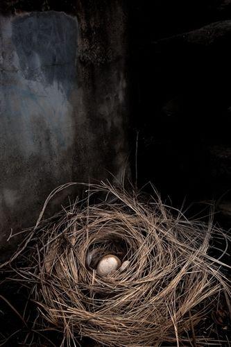 What lay in wait, inside each egg?
