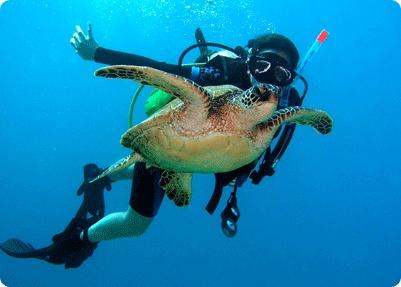 die turtles