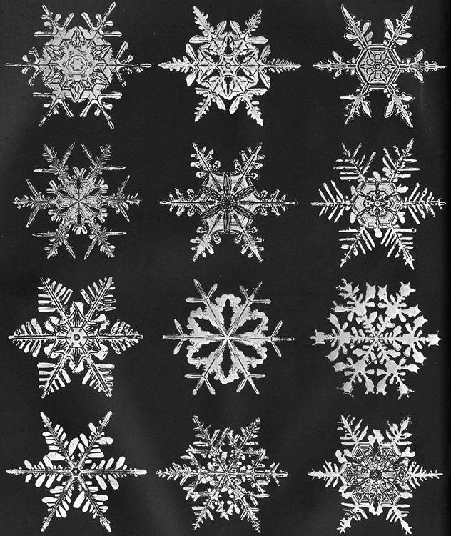 bentley snowflakes | Snowflake Wilson Bentley