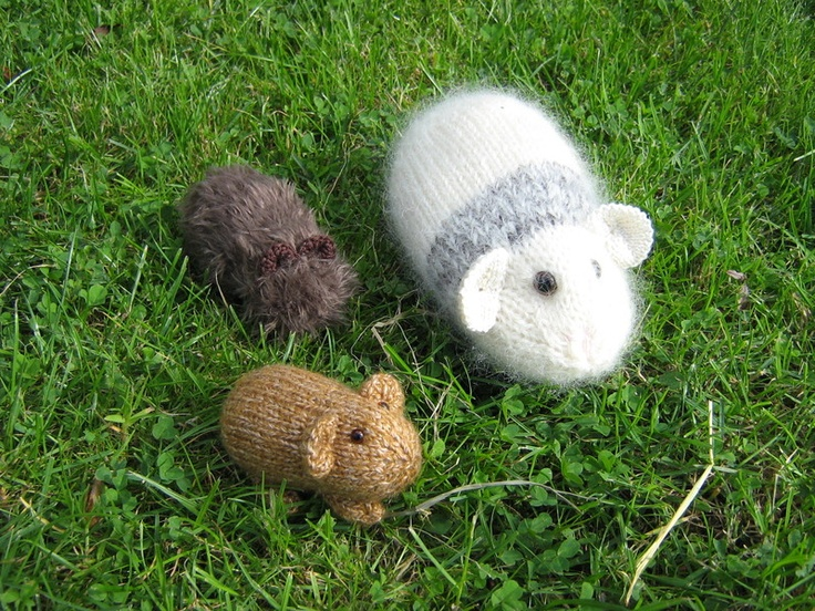 Knitting Pattern For A Guinea Pig : GUINEA PIGS Knitting Pinterest