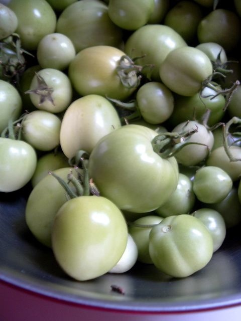 Green tomato salsa. I've made this for a few years & love that I can ...