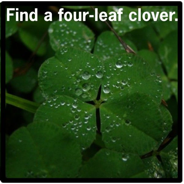 finding four leaf clover meaning Real, genuine four-leaf clovers come from the white clover plant, trifolium repens, considered to be the original shamrockyou may find others selling leaves as four-leaf clovers that are not genuine.
