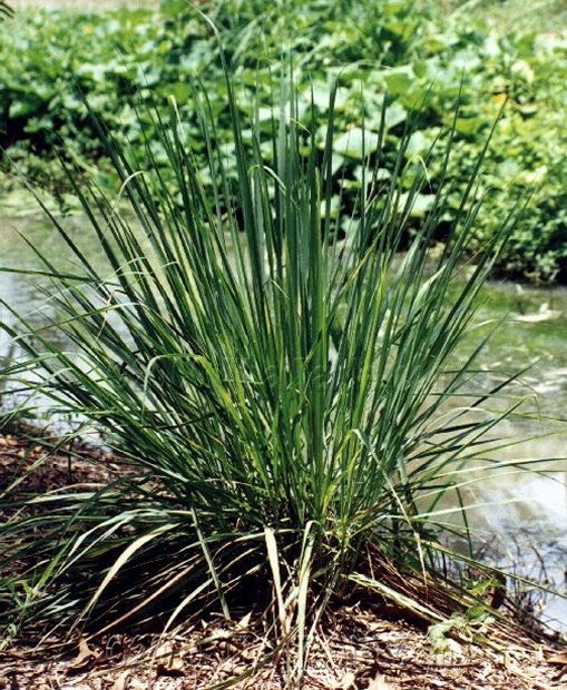 Pin by susan willson on gardening pinterest for Best plants to keep mosquitoes away