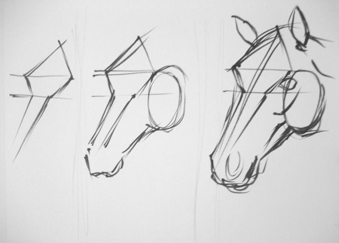 Horse face drawing step by step