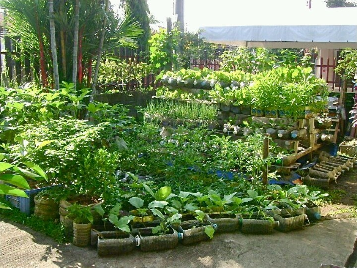 Recycled container garden recycling ideas pinterest - Recycled containers for gardening ...