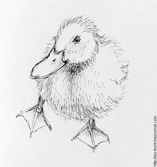 realistic duckling coloring pages - photo#35
