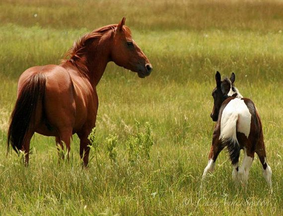 Mare and Foal - This way little one says Mama herd bonding 8x10 Photographic giclee print
