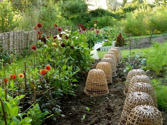 Bamboo cloches awesome gardens pinterest for Garden cloche designs