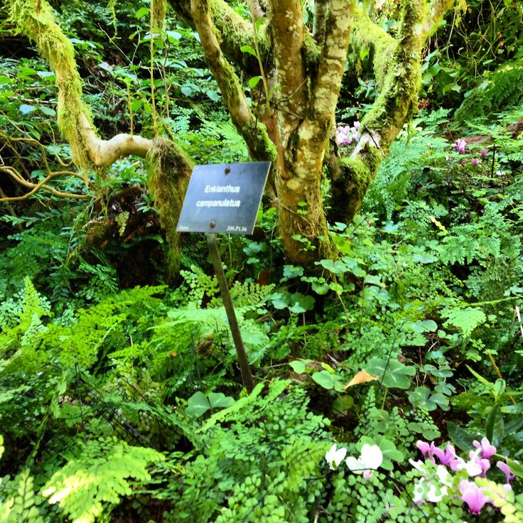 Leach Botanical Garden Portland Debbie Lusk Pinterest