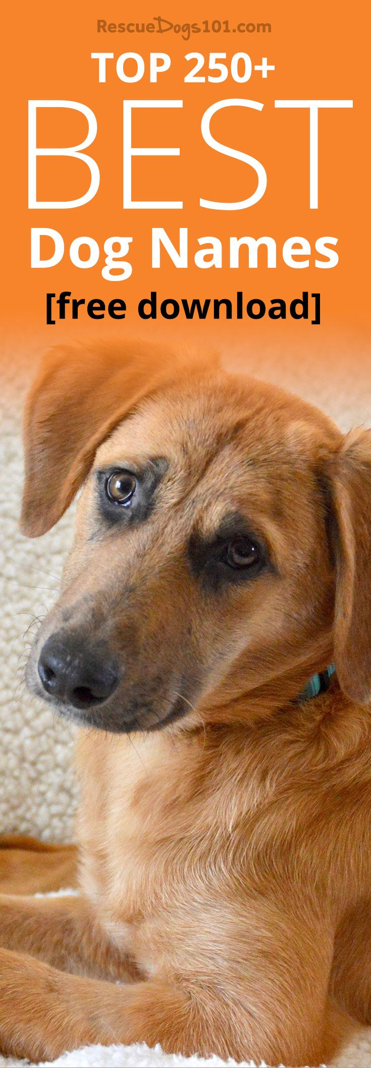 Dog Spaying Surgery  Everything you need to know about
